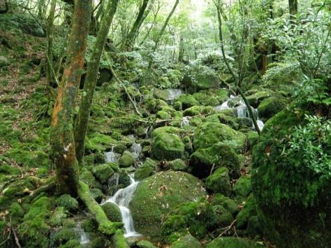 Kaikissa japanin metsissä ei ole näinkään paljon sammalta ja vettä, kertoo Emi.