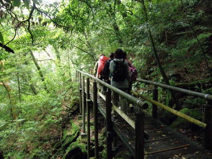 Yakushimassa metsäkylpijät pääsevät vaeltamaan hyvin rakennettuja ja merkittyjä reittejä.
