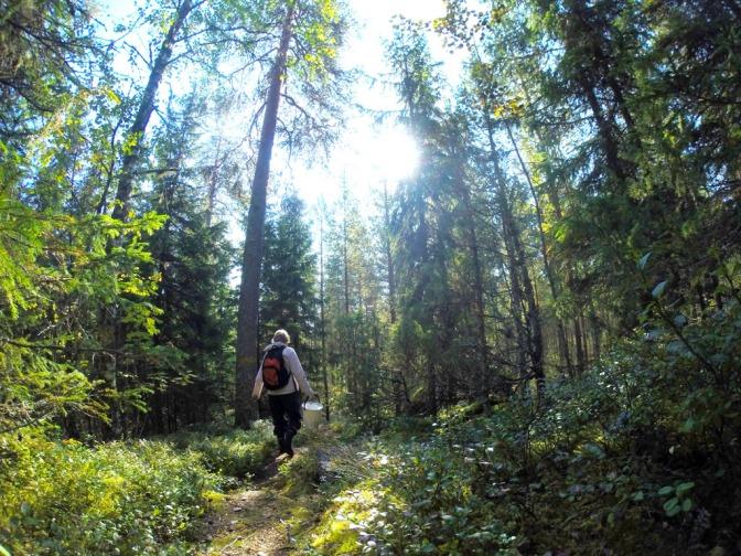 Hengitä terveyttä itsellesi metsästä
