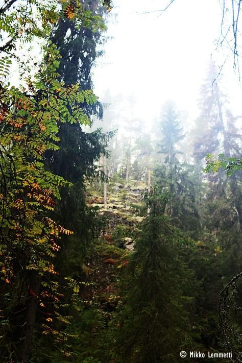 Syksyllä metsän hiljaisuus korostuu entisestään. Sumu tekee maisemasta salaperäisemmän.