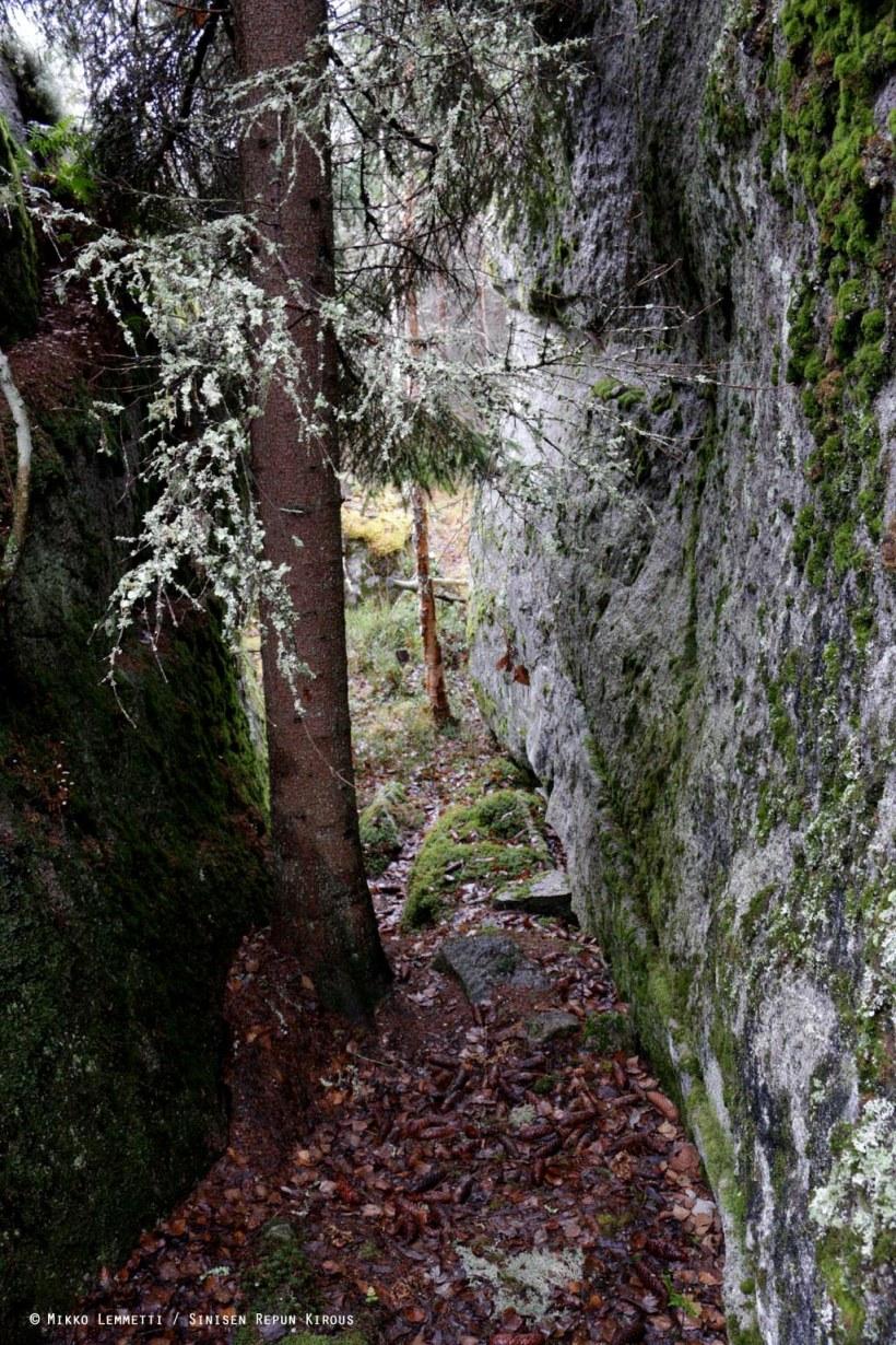 Kuusenkävyt lienevät tuosta solassa kasvavasta puusta lähtöisin.