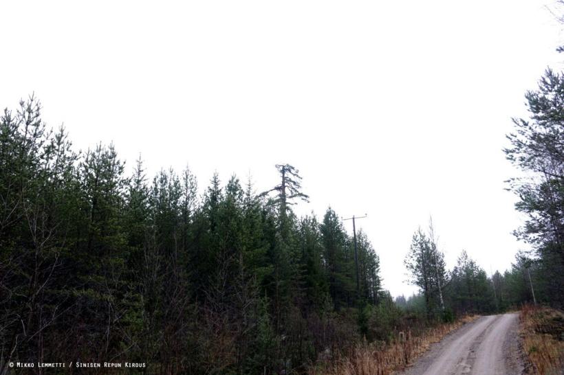 Tuonkokoista puuta on aika vaikea jättää huomaamatta, kun vain katsoo oikeasta suunnasta.