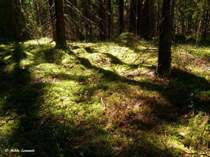 Parasta aikaa metsässä