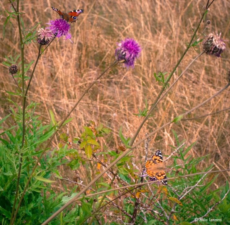 Perhosten saaminen riittävän lähelle toisiaan ja teräviksi olikin sitten eri juttu.