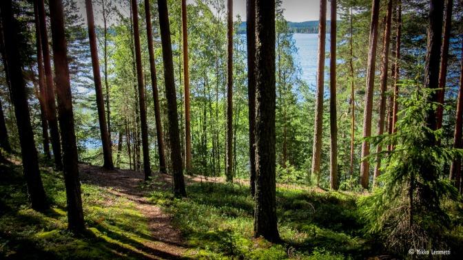 Uppoa metsään – löydä luonto ja itsesi
