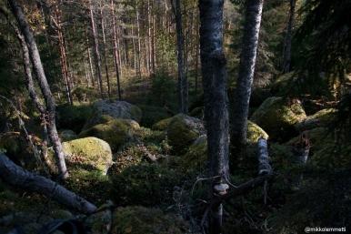 PESÄLUOLAT-1225
