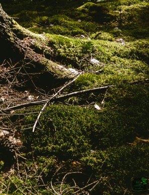 Juurrutetaan luonto ihmiseen! Let's root together for Nature!