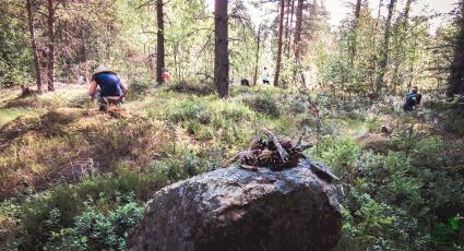 Metsäterapian harjoitusmaastoa. Forest Therapy proving grounds.